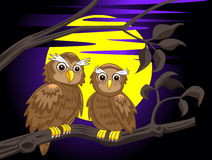 Couple owl Stock Photo