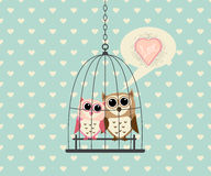 Couple Owl In Cage with Love Royalty Free Stock Photography