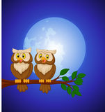 Couple owl cartoon at night Royalty Free Stock Images
