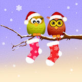 Couple of owls at Christmas Royalty Free Stock Images