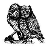 Couple of owls hand drawn sketch ink  illustration Royalty Free Stock Image