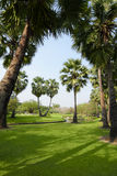 Couple palm tree Stock Photo