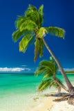 Couple of palm trees against vibrant blue sky, Fiji Royalty Free Stock Photo