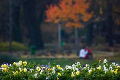 Couple in the park. Park in autumn, with couple and flowers Stock Images