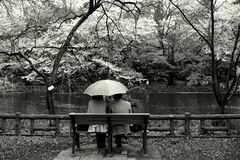 Couple in the park, tokyo. Taken at inokashira park in Tokyo, Japan during the cherry blossom season Royalty Free Stock Image