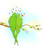 Couple of Parrot Stock Images