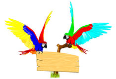 Couple parrot Royalty Free Stock Photography