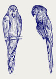 Couple of parrot stock illustration