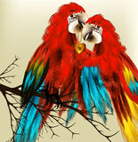 Cute couple of colorful vector realistic ara parrots sit on bran. Couple of parrot  with golden heart symbol of love Stock Photography