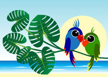 Couple of parrots. Stock Photo