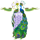 Couple peacocks. Ribbon with text. Green design. Stock Image
