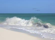 Couple pelicans on the Caribbean coastal wave. Cuba Stock Photos