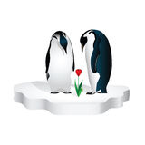A couple of penguins. Are looking at a flower that grew out of the warmth of their love Royalty Free Stock Photo