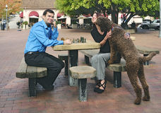 Couple and pet dog. Couple play outdoor chess accompanied by their pet dog Royalty Free Stock Photography