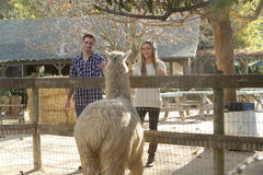 Couple at Petting Zoo. A young couple on a date at a petting zoo Royalty Free Stock Images