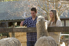Couple at Petting Zoo Royalty Free Stock Image