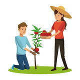 Couple picked tomato tree basket Royalty Free Stock Photography