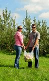 Couple picking apples. A couple holding a bag of apples they just picked Royalty Free Stock Image