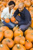 Couple picking pumpkin. Royalty Free Stock Photos