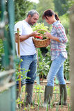 Couple picking vegetables Stock Image