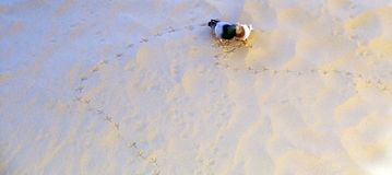 Couple of pigeons in love in the sand of the beach of Cadiz. Andalusia. Spain. Europe royalty free stock image