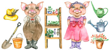 Couple of pigs with garden equpment Stock Image