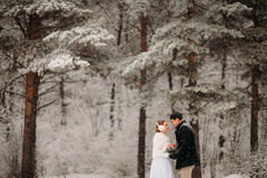 Couple in a pine forest Stock Photos