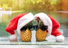 Couple pineapples on winter holidays stock photos