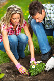 Couple planting flowers Stock Photo