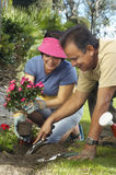 Couple Planting Flowers In Garden Royalty Free Stock Photos