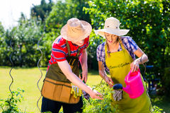 Couple planting flowers Royalty Free Stock Photography