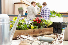 Couple Planting Rooftop Garden Together Stock Photo