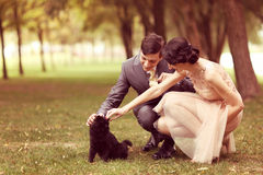 Couple playing with black cat Royalty Free Stock Image