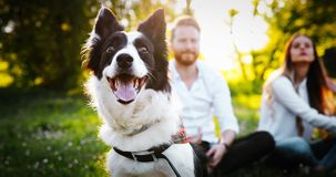 Couple playing with dogs stock photography