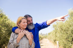 Couple pointing at distance in olive farm. On a sunny day Royalty Free Stock Photo
