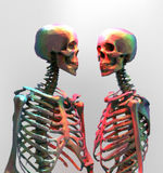 A couple of polygonal skeleton in rainbow color on bright backgr. A couple of polygonal skeleton in rainbow color with wireframe edge on bright background Royalty Free Stock Image