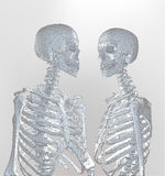 A couple of polygonal skeleton in soft light on white background. A couple of polygonal skeleton in soft light monochrome color with wireframe edge on white Royalty Free Stock Photos