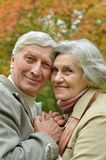 Couple posing   in the park Royalty Free Stock Photography