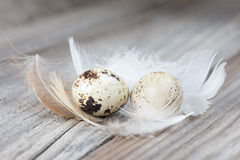 A couple of quail eggs Royalty Free Stock Images