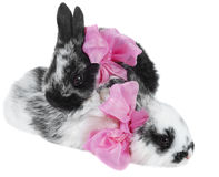 Couple rabbit with pink bows Stock Photos