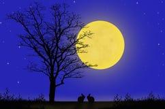 Couple rabbits and full moon night Royalty Free Stock Photo