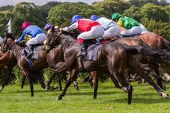 Couple of racehorses Stock Photos