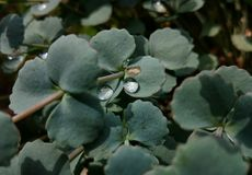 Rain drops in the garden. Couple of raindrops left after the rain royalty free stock image
