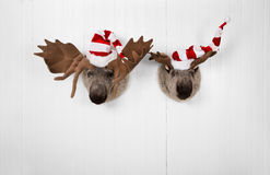 Couple of reindeer hanging on a wall for christmas decoration. Stock Photography