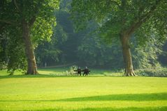 Couple relaxing on park bench. Scenic view of green park with couple sat on bench under leafy trees Stock Image