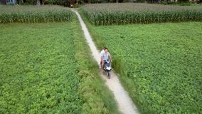 Couple rides scooter between fields on spring day aerial. Aerial view happy couple rides modern scooter between fields with green plants on sunny spring day stock footage