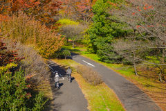 Couple riding bicycle in autumn color park Royalty Free Stock Photo