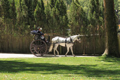 Couple riding a buggy in a garden. Couple riding a ancient buggy pulled by a white horse in a garden Stock Photo