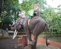 Couple riding and traveling on an elephant Royalty Free Stock Photos