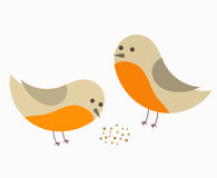 Couple of robin birds Stock Photos